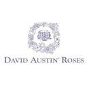 David Austin Roses Discounts