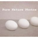 Pure Nature Photography Discounts