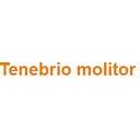 Tenebrio molitor Discounts