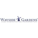 Wayside Gardens Discounts