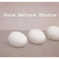 Pure Nature Photography coupons